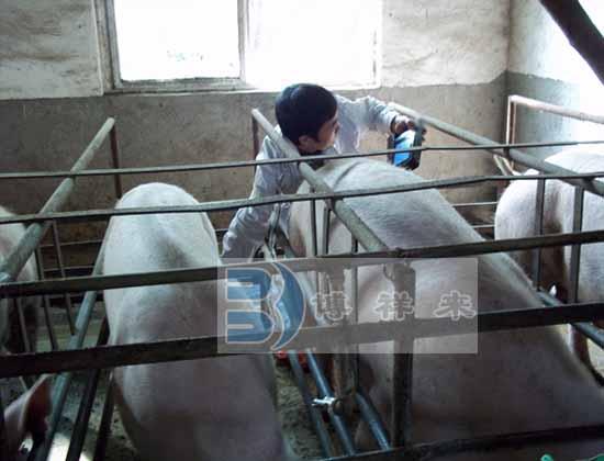 猪用B超测试图