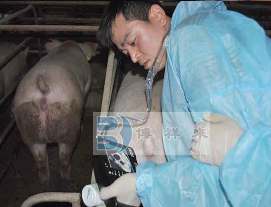 猪用B超培训图